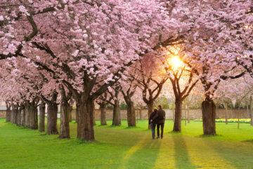 運動不足解消桜並木