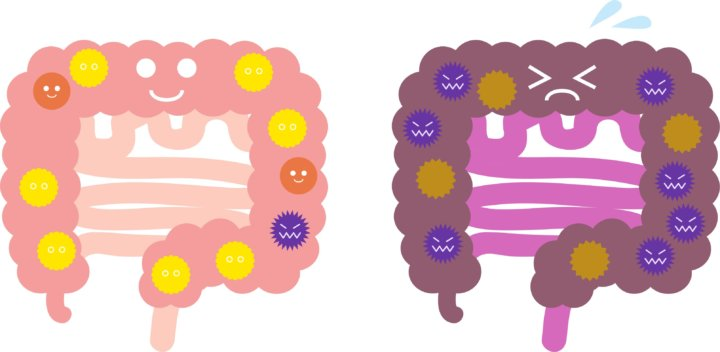 『腸内細菌の善玉菌を増やしてダイエット成功へ!』~練馬・江古田のパーソナル ジム~の画像