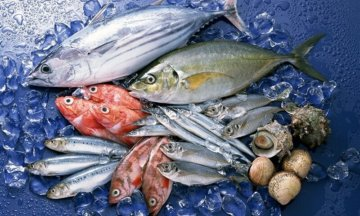 魚油で強くなれ!~健康・ダイエットに役立つ栄養学~(ダイエット専門駒沢大学パーソナルトレーニング ジム)の画像